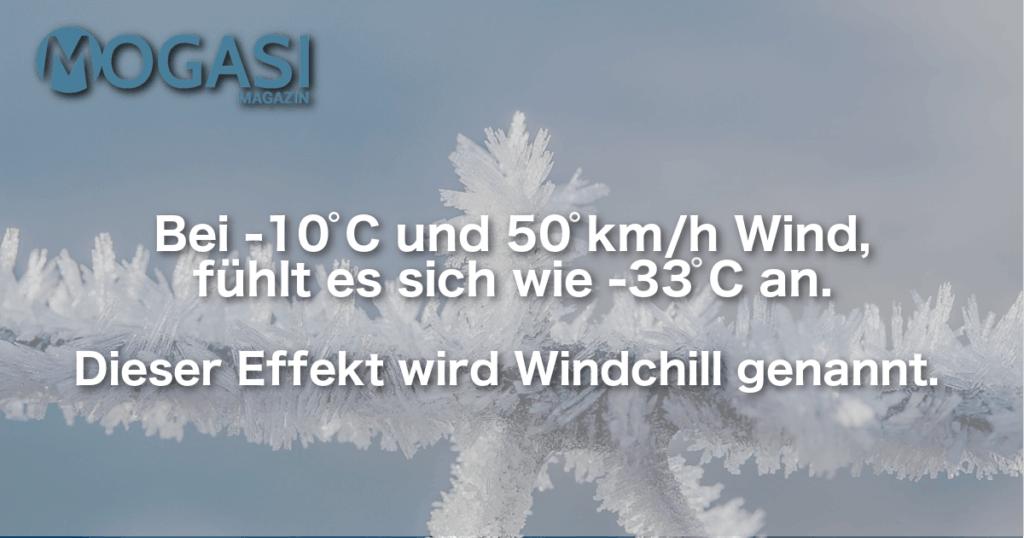 Windchill, Mogasi, Mogasifakten, Ski, Fakten