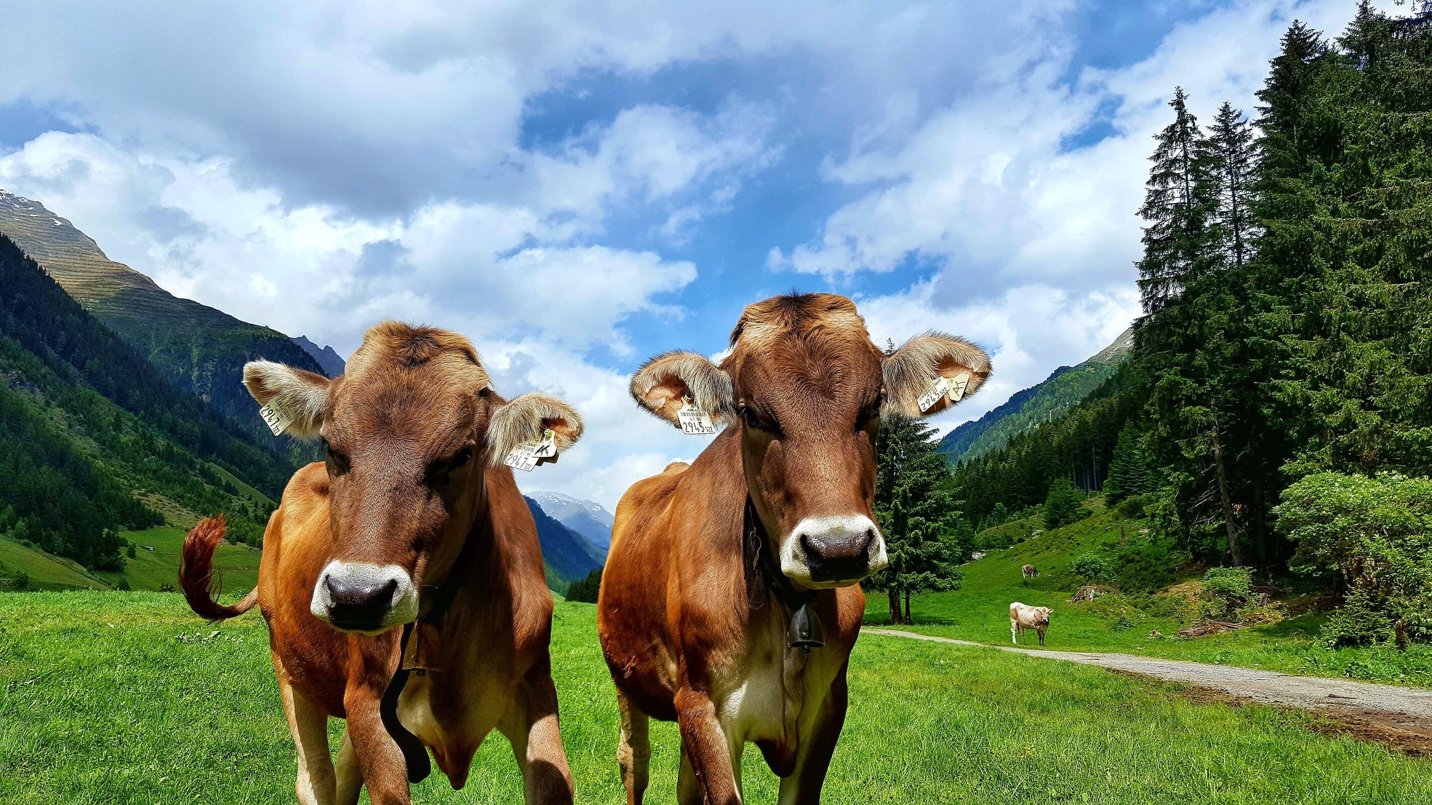 Landwirtschaft in den Bergen